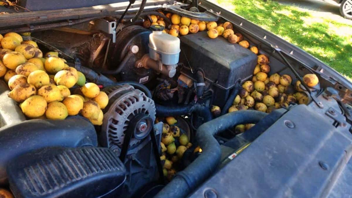 Американец нашел под капотом своей машины 70 килограммов орехов: их спрятала белка - Развлечения