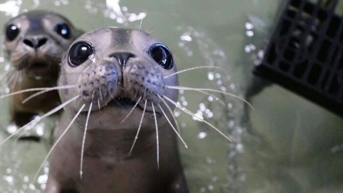 Куда уж милее: трогательная подборка фото новорожденных животных, которые заставят вас растаять - Развлечения