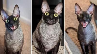 Посадити його в клітку і молитися: екзорцист назвав кота, який прославився в соцмережах, демоном