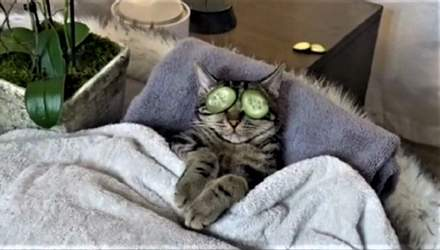 Спа для кота: видеоролик с котом, который наслаждается спа-процедурами, стал вирусным в тиктоке