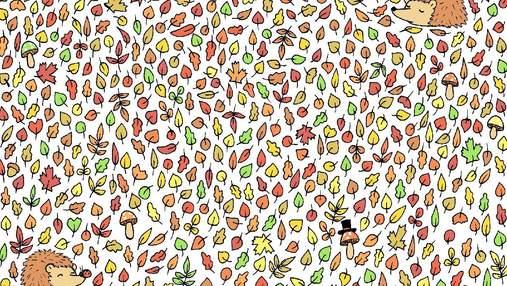 Головоломка тижня: осіння загадка для любителів збирати жолуді