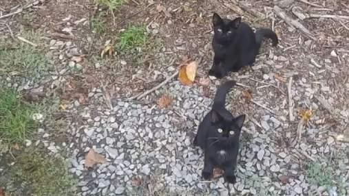 Оптическая иллюзия: посчитайте котиков на фотографии
