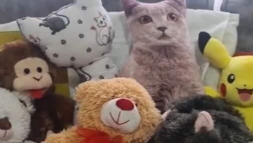 Людям трудно найти настоящего кота среди игрушек: эпическая загадка