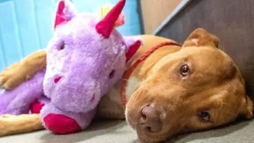 Бездомный пес 5 раз пытался украсть из магазина плюшевого единорога